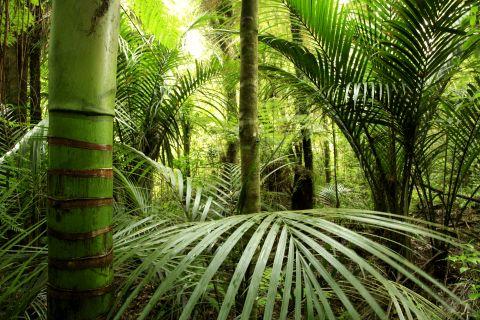 Fototapeten Motiv Bäume & Wald