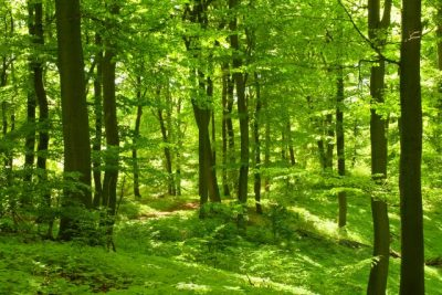Malerei Horvath - Fototapeten Motiv Bäume & Wald Nr. 10