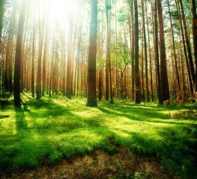 Malerei Horvath - Fototapeten Motiv Bäume & Wald Nr. 13