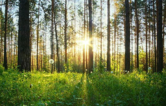 Malerei Horvath - Fototapeten Motiv Bäume & Wald Nr. 16