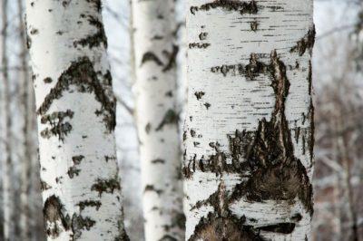 Malerei Horvath - Fototapeten Motiv Bäume & Wald Nr. 17