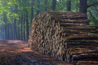 Malerei Horvath - Fototapeten Motiv Bäume & Wald Nr. 19
