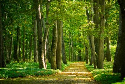 Malerei Horvath - Fototapeten Motiv Bäume & Wald Nr. 20