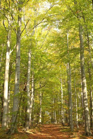 Malerei Horvath - Fototapeten Motiv Bäume & Wald Nr. 21