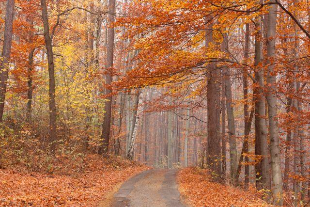 Malerei Horvath - Fototapeten Motiv Bäume & Wald Nr. 25