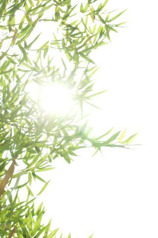 Malerei Horvath - Fototapeten Motiv Bäume & Wald Nr. 29