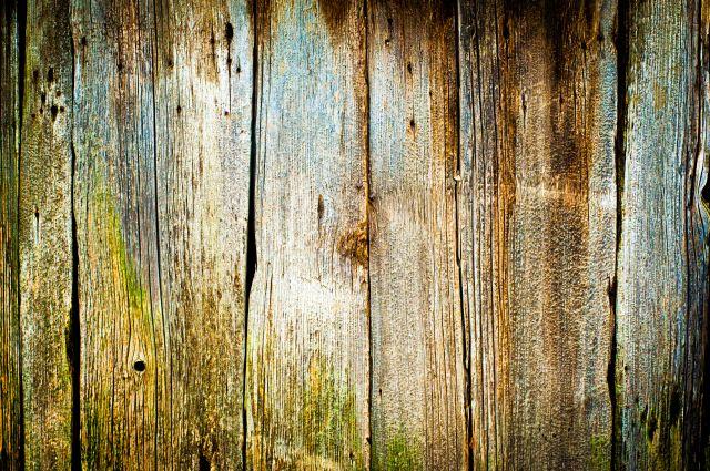Malerei Horvath - Fototapeten Motiv Bäume & Wald Nr. 34