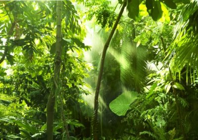 Malerei Horvath - Fototapeten Motiv Bäume & Wald Nr. 4