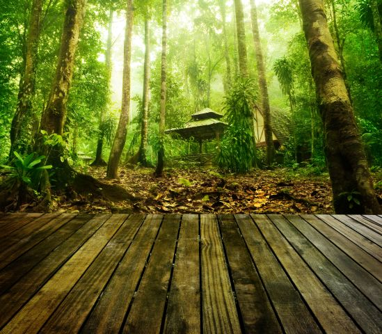 Malerei Horvath - Fototapeten Motiv Bäume & Wald Nr. 40