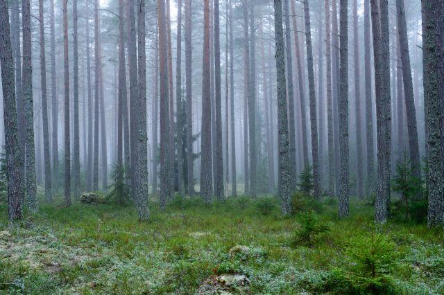 Malerei Horvath - Fototapeten Motiv Bäume & Wald Nr. 44
