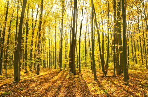Malerei Horvath - Fototapeten Motiv Bäume & Wald Nr. 5