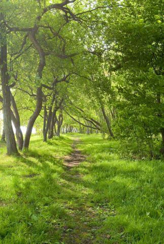 Malerei Horvath - Fototapeten Motiv Bäume & Wald Nr. 7