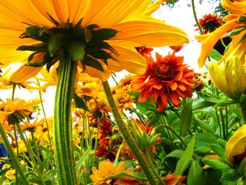 Malerei Horvath - Fototapeten Motiv Blumen Nr. 1