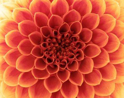 Malerei Horvath - Fototapeten Motiv Blumen Nr. 6