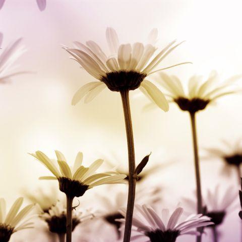 Malerei Horvath - Fototapeten Motiv Blumen Nr. 10