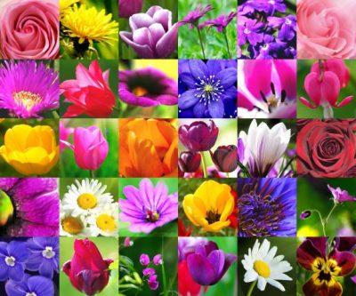 Malerei Horvath - Fototapeten Motiv Blumen Nr. 11