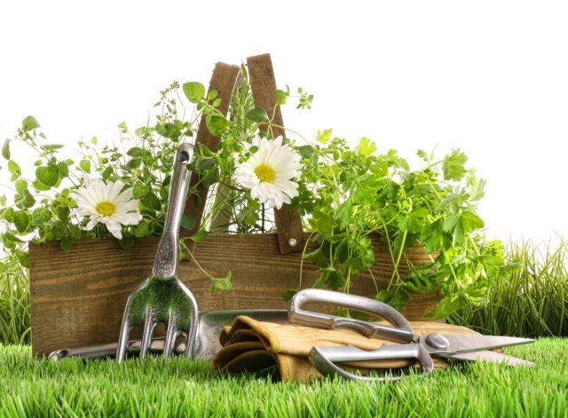 Malerei Horvath - Fototapeten Motiv Blumen Nr. 16
