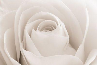 Malerei Horvath - Fototapeten Motiv Blumen Nr. 21