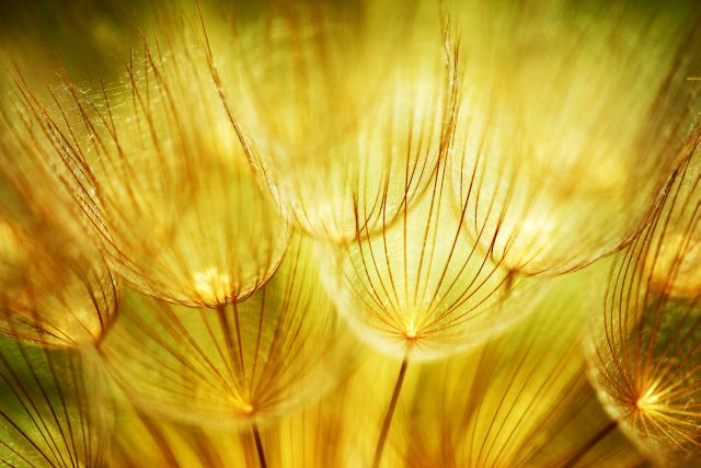 Malerei Horvath - Fototapeten Motiv Blumen Nr. 22