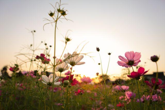 Malerei Horvath - Fototapeten Motiv Blumen Nr. 31