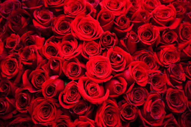 Malerei Horvath - Fototapeten Motiv Blumen Nr. 33