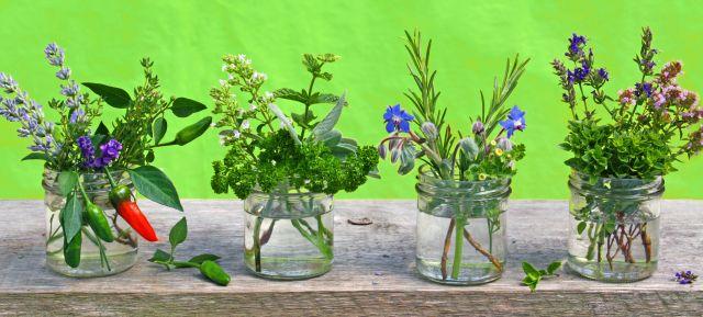 Malerei Horvath - Fototapeten Motiv Blumen Nr. 37