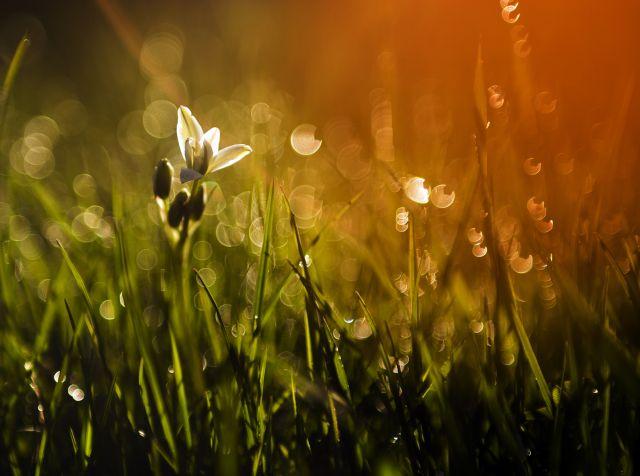 Malerei Horvath - Fototapeten Motiv Blumen Nr. 43