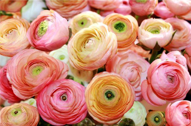 Malerei Horvath - Fototapeten Motiv Blumen Nr. 58