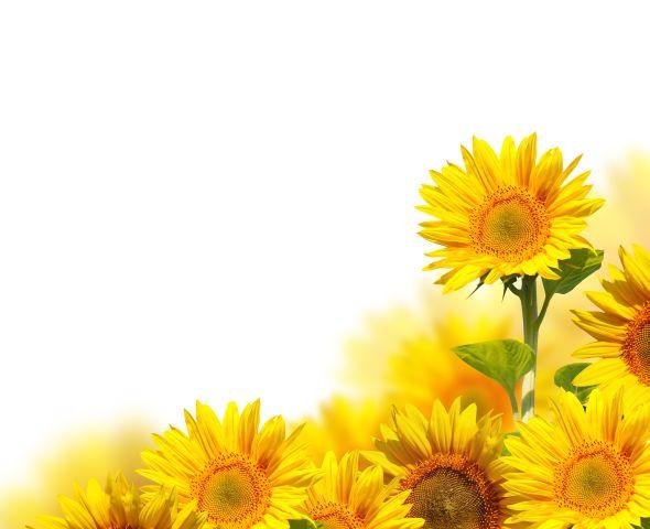 Malerei Horvath - Fototapeten Motiv Blumen Nr. 60