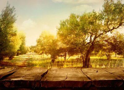 Malerei Horvath - Fototapeten Motiv Landschaften Nr. 97