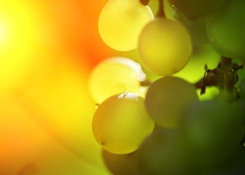 Malerei Horvath - Fototapeten Motiv Wein Nr. 4