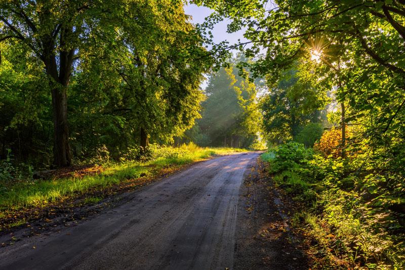 Malerei Horvath Fototapete Bäume & Wald 45