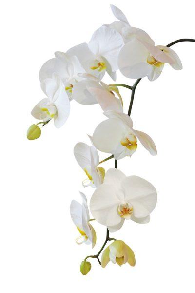 Malerei Horvath Fototapete Blumen 76