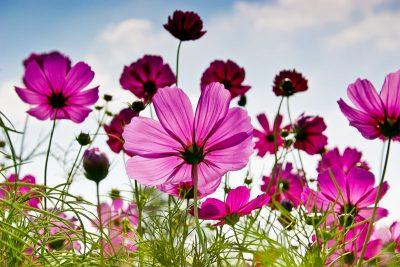 Malerei Horvath Fototapete Blumen 77