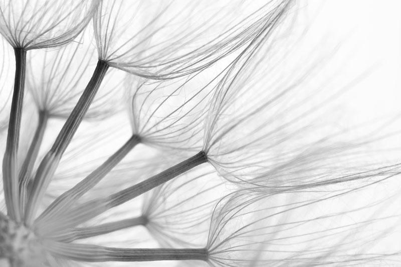 Malerei Horvath Fototapete Blumen 78