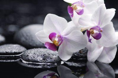 Malerei Horvath Fototapete Blumen 79