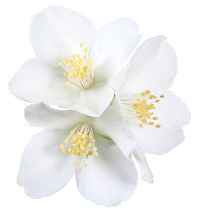 Malerei Hovath Fototapete Blumen 86