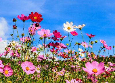 Malerei Horvath Fotoapete Blume 84